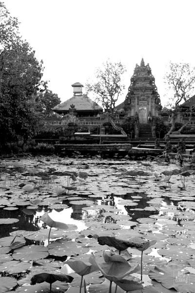 A lotus garden and a temple.