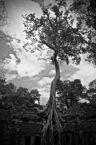 Ta Prohm_Tree